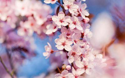 letak april 2019 pomlad češnje
