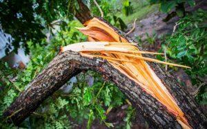 toča klesti neurje sadike drevje Labicuper Protifert protitočne mreže