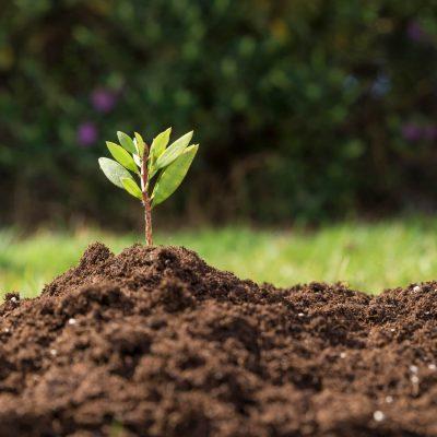 poljedeljstvo, polje, njiva, kmetija, rast