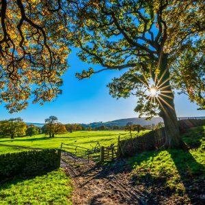 poljedelstvo in živinoreja, za kmete, kmetije, kmet, kmetijska zadruga šaleška dolina, pomoč, izdelki, storitve