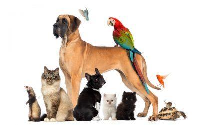 hrana in pripomočki za male živali