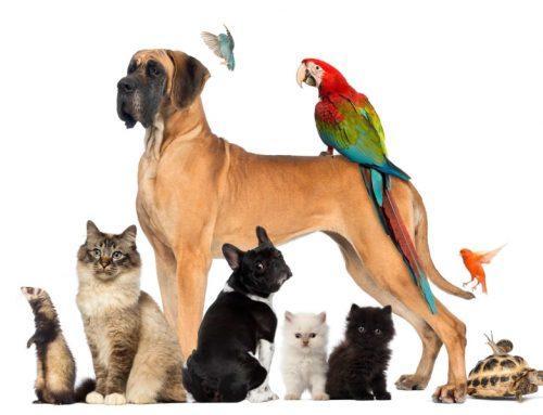 Novi asortiman izdelkov za male živali