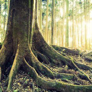 gozdovi Slovenije, odkup, prodaja lesa