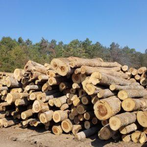 hlodovina, odkup, prodaja, les, lesni sortimenti, zadruga, gozdarstvo, lesarstvo, Kmetijska zadruga, Šaleška dolina