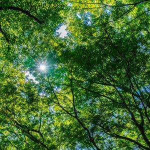 slovenski gozdovi, les, gozd, šaleška, savinjski, hlodi, hlodovina