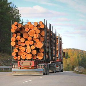 transport, prevoz hlodov, hlodovina, les, zadruga, KZ, odkup, prodaja, žaga