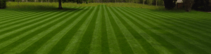zelenica, trava, trave, Barenbrug