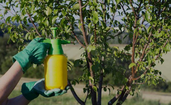 svetovanje FFS fitofarmacevtska sredstva pravilno in pravočasno zatiranje bolezni in škodljivcev